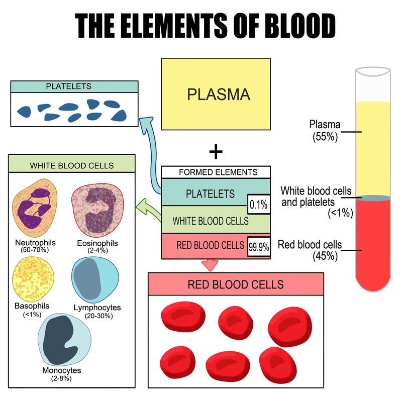 An Overview Of Platelet Rich Plasma Therapy